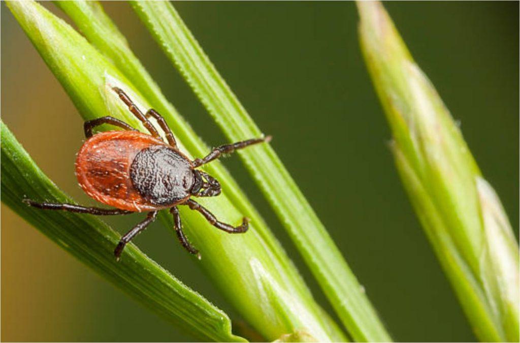 tick warning_Blog MSN_best bug spray_best insect repellent_proven repellent_travel_zika_dengue_malaria_picaridin_safe_#picaridin_#deetfreeme_lyme_lyme disease