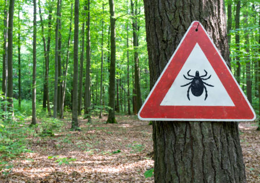 Increased outdoor activity means exposure to ticks