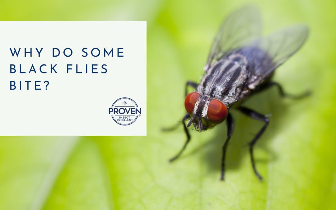 Why Do Some Black Flies Bite?