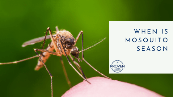 When is Mosquito Season?